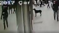 Karnı acıkan köpek marketin camına vurarak yemek istedi