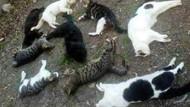 Karaman'da kedi ve köpek ölümlerine tepki