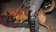 Hollanda'da polis köpekleri Türklere böyle saldırdı