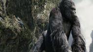King Kong dizi oluyor