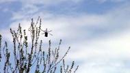 Şırnak'ta teröristlerin açtığı ateş sonucu 1 asker şehit oldu