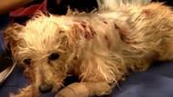 Köpeğini 19 Kez Bıçakladı - Köpek 1 Ay Sonra Bakın Ne Hale Geldi