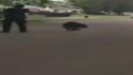 ABD'de polis köpeği böyle vurdu