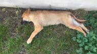 Ankara'da yavru köpeğe tecavüz iddiası!