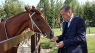 Mustafa Varank, Cumhurbaşkanı Erdoğan'ın at binerken fotoğraflarını paylaştı