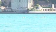 İstanbul Boğazı'nda Yunusların martılarla balık kapma yarışı