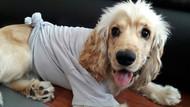 Lojmanda yaşayan köpeği şikayet üzerine attılar