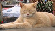 Belediye başkanı kedi hayatını kaybetti