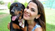 Kaybolan Rottweiler cinsi köpeğini dedektif gibi iz sürüp buldu