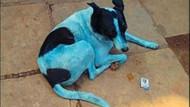 Hindistan'da görüntülendi mavi köpeklerin sırrı ne?