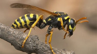 Arı saldırısından hayatını kaybetti