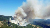 Son dakika: Muğla'da orman yangını! Zeytinköy boşaltılıyor