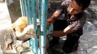 Kapıya sıkışan köpeği böyle kurtardılar
