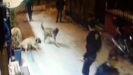 Beyoğlu'nda sokak köpeğine kemerli bıçaklı işkence
