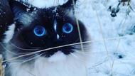 İlk kez kar gören hayvanların şaşkın halleri