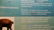 Ankara'daki Tabiat Tarihi Müzesi'nde evrim kelimesi sansürlendi; yerine gelişim yazıldı!
