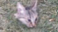 Vahşet! Parkta başı kesilmiş kedi bulundu!