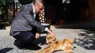 Erdoğan'dan hayvan hakları talimatı: Yasa hala neyi bekliyor, bir an önce çıkartın