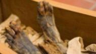 Ölen babasının cesedini 10 yıl evinde sakladı