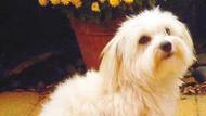 Boşanma davasında köpeğe nafaka