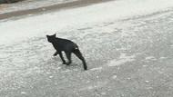 İstanbul'da sayıları çoğalan kuyruğu kesik kedilerin sırrı ne?