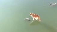 Balığı buzun içinden çıkarmaya çalışan kedinin görüntüleri izleme rekoru kırdı