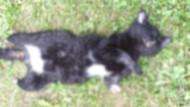 Vicdansızlıkta son nokta! Yavru kedi ayakları kesilmiş halde ölü bulundu
