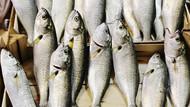 Lüfer balığının faydaları