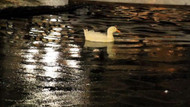 Ankara'da havuzlar dondu, yollar buz pistine döndü