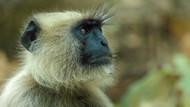 Satın aldıkları maymunu canlı canlı yediler kanını içtiler!
