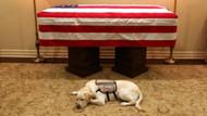 Köpeği George Bush'un ölümü sonrasında hüzne boğuldu