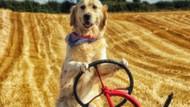 Traktör süren Rambo köpek sahibine yardım ediyor