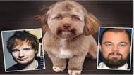 İnternetin yeni fenomeni: İnsan yüzlü köpek Yogi