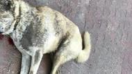 Köpeği öldürülen hayvansever dava açacak