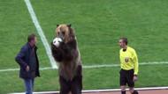 Sahada tuhaf görüntüler: Ayı futbol maçını başlattı