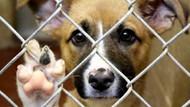 Kimsesiz Hayvanları ve Doğayı Koruma Derneği: Yeni yasa belediyelere katliam yetkisi veriyor