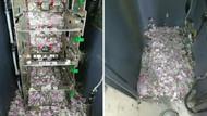 ATM'ye giren fareler tüm banknotları yedi