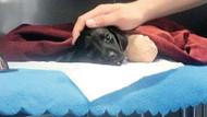 Bacakları kesilen yavru köpek vahşetinde tutuklanan şüphelinin eşi: Gerçek cani saklanıyor