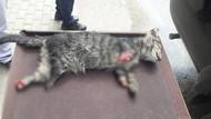 Sakarya'nın ardından bir vahşet de Bursa'da: 4 ayağı kesilmiş yavru kedi ölü bulundu