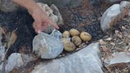 Yemek pişirmek isterken dağı ateşe verdiler