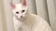 Psikopat kedisinden muzdarip kıza gelen yorumlar kahkahaya boğdu