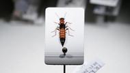 Kanser tedavisinde umut ışığı: Paederus böceği zehri