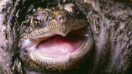 Öğrencilerinin gözü önünde köpek yavrusunu kaplumbağaya yediren öğretmene dava