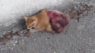 Antalya'da korkunç olay! Kediyi canlı canlı...