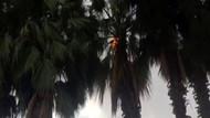 Şanlıurfa'da çalışırken üzerine yıldırım düşen genç kız hayatını kaybetti
