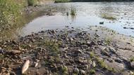 Karabük'te yüzlerce ölü balık kıyıya vurdu