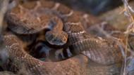 ABD'de kesilmiş yılan kafası bir adamı ısırdı