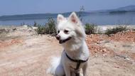 Kafesini açan köpek feribottan denize atladı