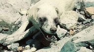 Bu kez Hakkari: Gözleri oyulmuş köpek bulundu