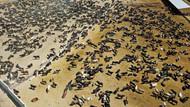 Bakan Bekir Pakdemirli: Şarbonlu hayvanlar piyasaya verilmedi